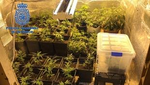 La Policía Nacional desmantela una plantación de marihuana ''indoor''