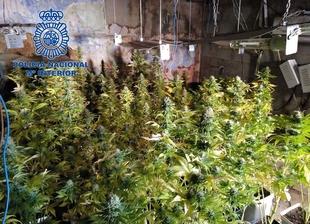Desmantelan dos plantaciones de marihuana ''indoor'' en la calle Gurugú