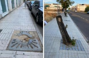 El PSOE exige que no haya un alcorque sin árbol en la ciudad a finales de año