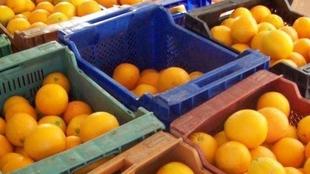 Intervenidas en Badajoz 475 kilos de naranjas y patatas que carecían de ''todo tipo de documentación''