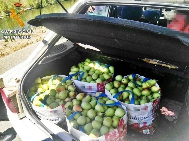 Sorprendidos tres miembros de una misma familia tras roboar 100 kilos de frutas de una finca de Badajoz