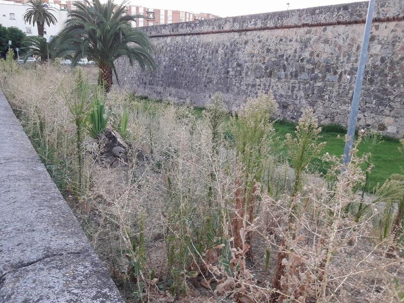 Badajoz Adelante pide explicaciones por el ''vergonzoso estado'' de las zonas verdes de Badajoz
