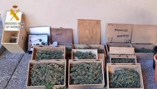 Detenido un vecino de Badajoz por usar su vivienda como supuesto punto de cultivo y secadero de marihuana