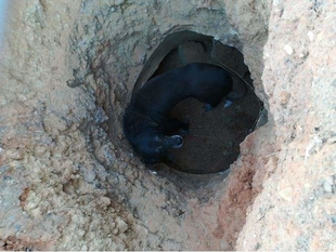 Rescatado en Badajoz un perro dentro de un pozo de unos dos metros y medio de profundidad