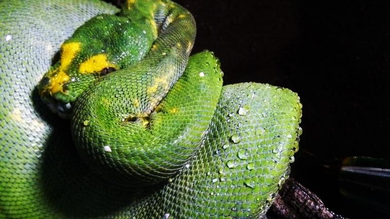 Taller para aprender a cuidar a los animales exóticos en Ámbito Cultural