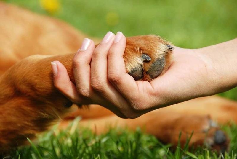 El Corte Inglés de Badajoz colabora en la tercera edición de la Recogida de Pienso para Mascotas