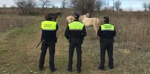 Intervenidos seis caballos que andaban sueltos por la Barriada de la Banasta y la Carretera de Valverde