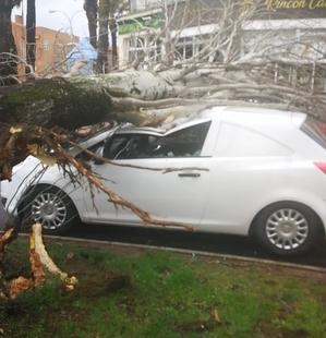 El PSOE denuncia que los árboles caídos