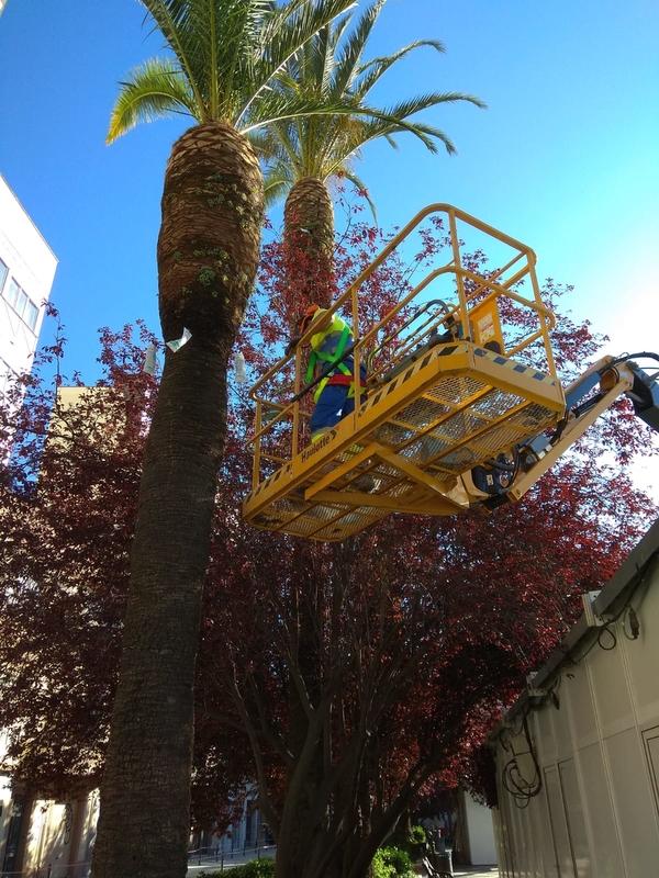 20 palmeras de San Francisco se tratan contra el picudo rojo con tiametoxm