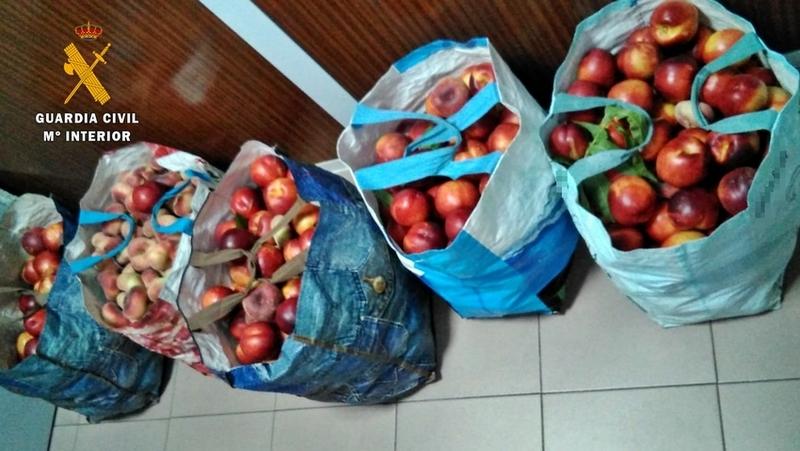 La Guardia Civil sorprende a dos vecinos de Badajoz con 100 kg de fruta que acababan de sustraer