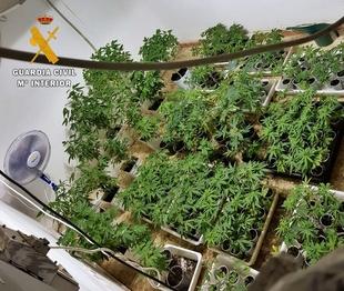 La Guardia Civil interviene 400 plantas de marihuana y medio kilo de cogollos en una parcela de la urbanización ''Campofrio''