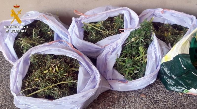 Desmantelado en un piso de San Roque un punto de cultivo de drogas