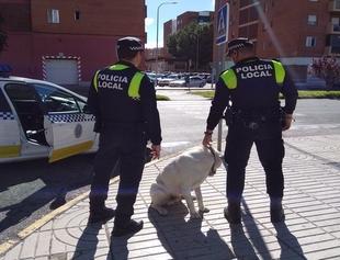 Recuperado un mastín que llevaba varios días deambulando por Badajoz
