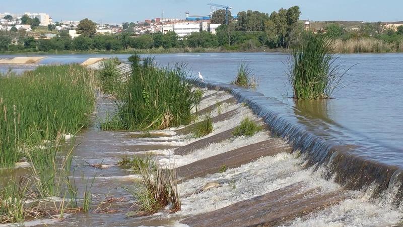 Dos visitas guiadas ornitológicas este sábado recorrerán la margen izquierda del río
