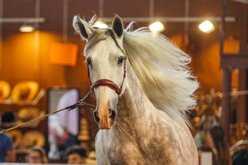 ECUEXTRE centra la atención del mundo del toro y del caballo en IFEBA