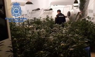 La Policía Nacional desmantela una plantación ''indoor'' de marihuana