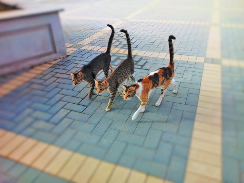 El suministro de alimentos en las colonias de los gatos callejeros se seguirá realizando