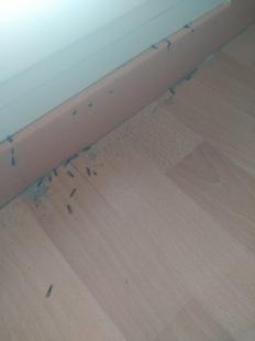 El PSOE pide información sobre el problema de termitas en unifamiliares de Cerro Gordo