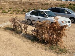 Piden arrancar los setos del aparcamiento del Baluarte de San Pedro